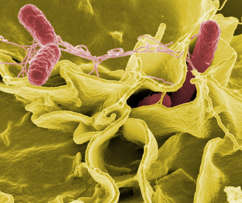 Hundreds Made Sick Due To Recent Outbreaks of Salmonella - Here's What You Should Know