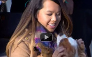 Video: Ebola-free nurse reunites with dog