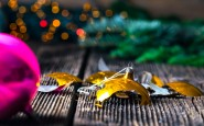 The Most Dangerous Holiday: Christmas And New Year's Eve Are A Prime Time For Accidents