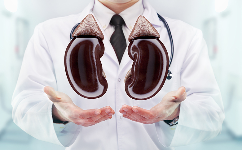 Top 10 Facts To Know About Kidneys