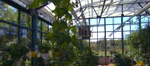 henrys-cafe-greenhouse
