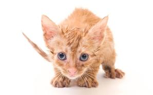 nervous-kitten