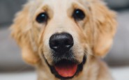 A Dog's Purpose: Using Canines In The Medical Field