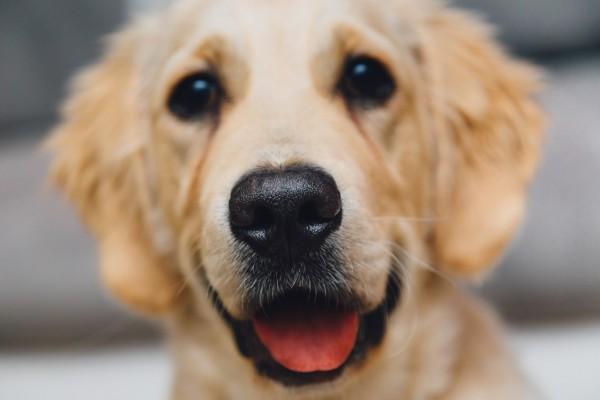 night-animal-dog-pet
