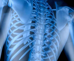 image of a spinal column