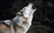 Ask Auntie Aggie: Were you people raised by wolves?!